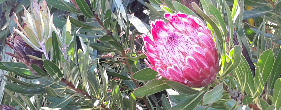 113-garden-02.jpg