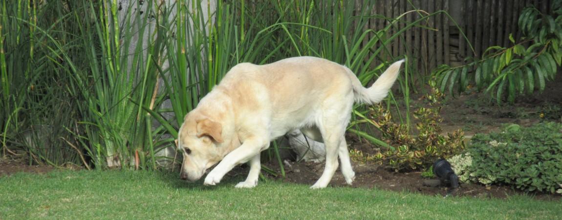 pet-friendly-01.jpg
